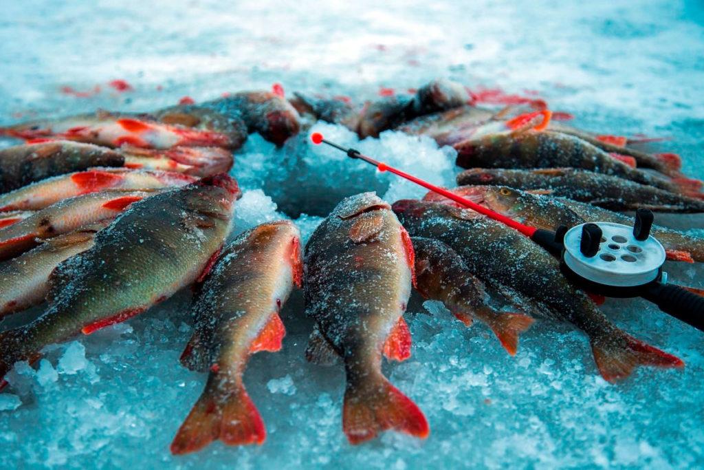 Чемпионат России по рыболовному спорту пройдет в Ольхонском районе